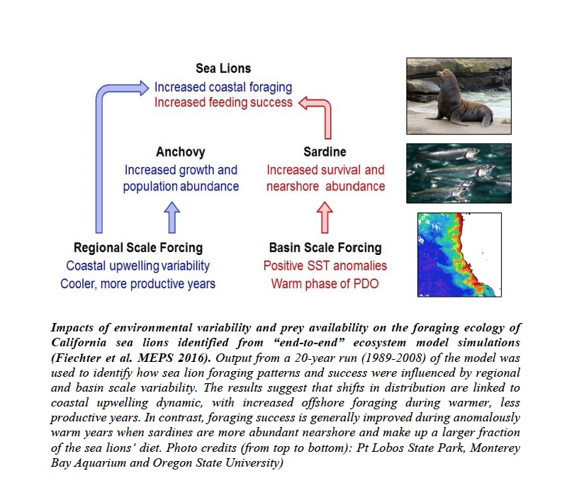 "Impacts of environmental variability and prey availability on the foraging ecology of California sea lions identified from ""end-to-end"" ecosystem model simulations (Fiechter et al. MEPS 2016"