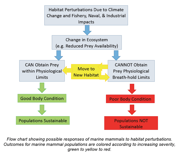 Flow chart showing possible responses of marine mammals to habitat perturbations.