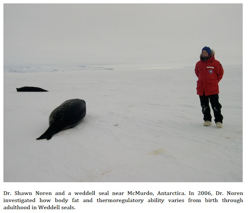 Dr. Shawn Noren and Weddell seal near McMurdo, Antarctica.